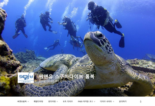 Website dolphindiveschool.co.kr desktop preview